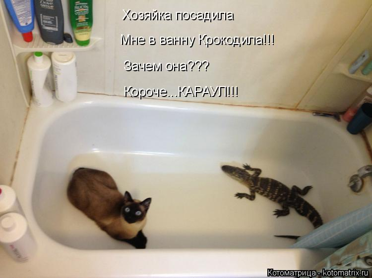 Котоматрица: Хозяйка посадила Мне в ванну Крокодила!!! Зачем она??? Короче...КАРАУЛ!!!
