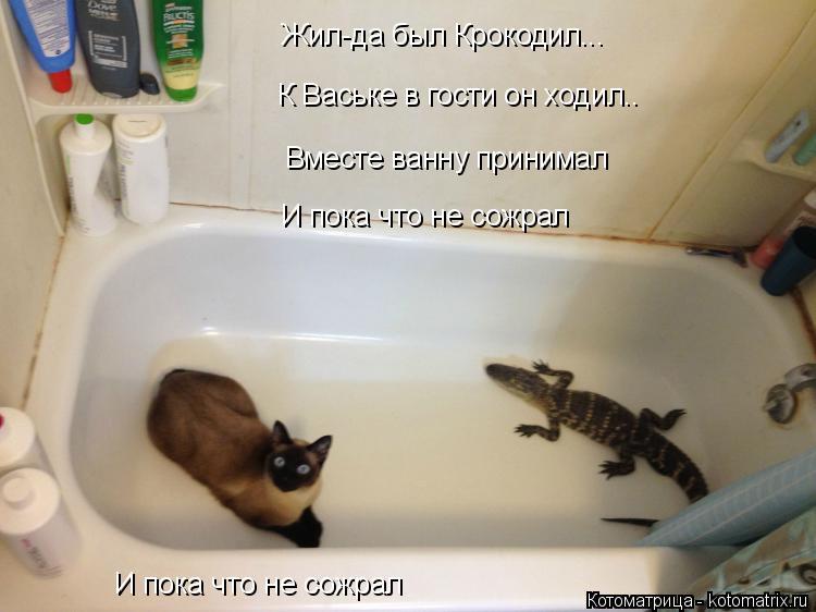 Котоматрица: Жил-да был Крокодил... К Ваське в гости он ходил.. Вместе ванну принимал И пока что не сожрал И пока что не сожрал