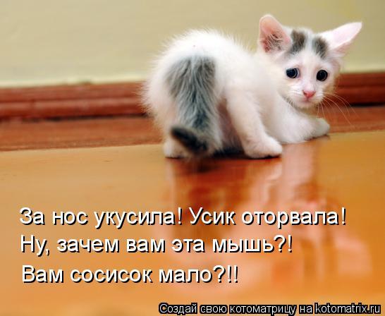Котоматрица: За нос укусила! Усик оторвала! Ну, зачем вам эта мышь?! Вам сосисок мало?!!