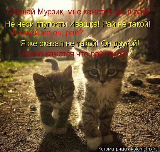 Котоматрица: Слушай Мурзик, мне кажется мы в раю! Не неси глупости Ивашка! Рай не такой! А какой же он, рай? Я же сказал не такой! Он другой! А мне кажется что