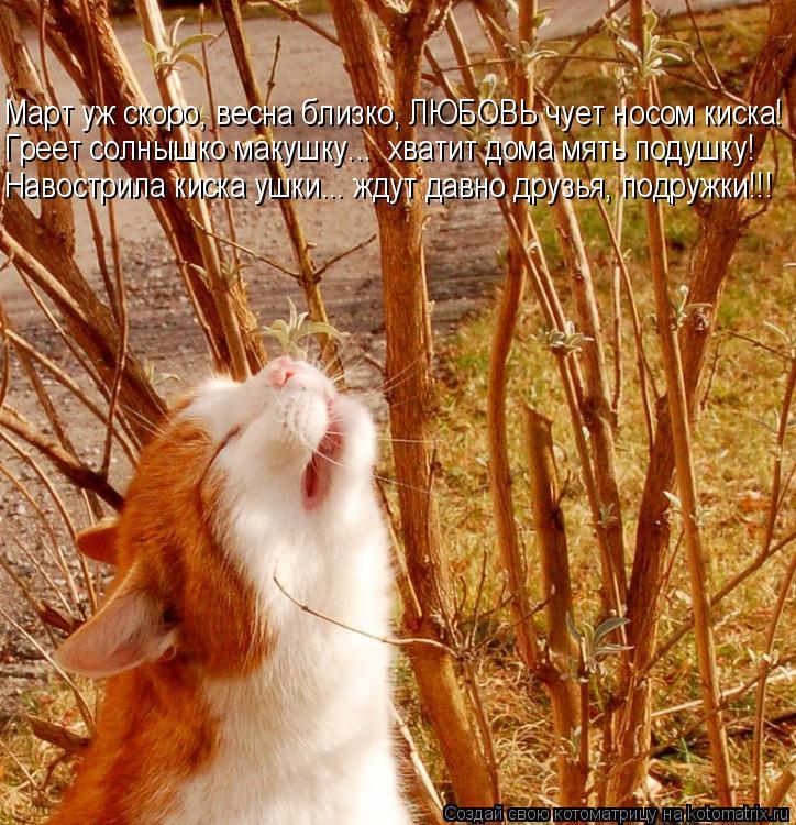 Котоматрица: Март уж скоро, весна близко, ЛЮБОВЬ чует носом киска! Греет солнышко макушку...  хватит дома мять подушку! Навострила киска ушки... ждут давно