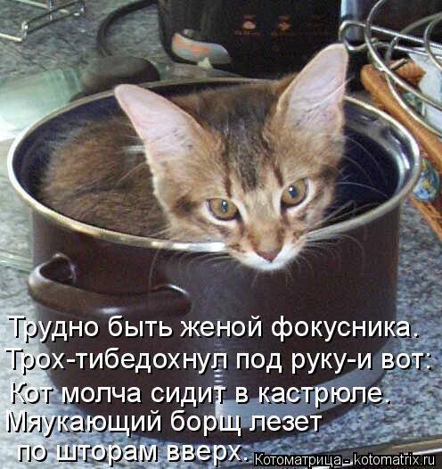 Котоматрица: Трудно быть женой фокусника. Трох-тибедохнул под руку-и вот: Кот молча сидит в кастрюле. Мяукающий борщ лезет  по шторам вверх.
