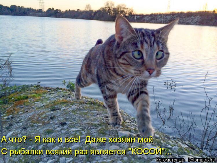 """Котоматрица: А что? - Я как и все!  Даже хозяин мой С рыбалки всякий раз является """"КОСОЙ""""..."""