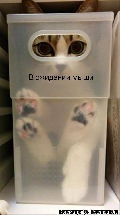 Котоматрица: В ожидании мыши