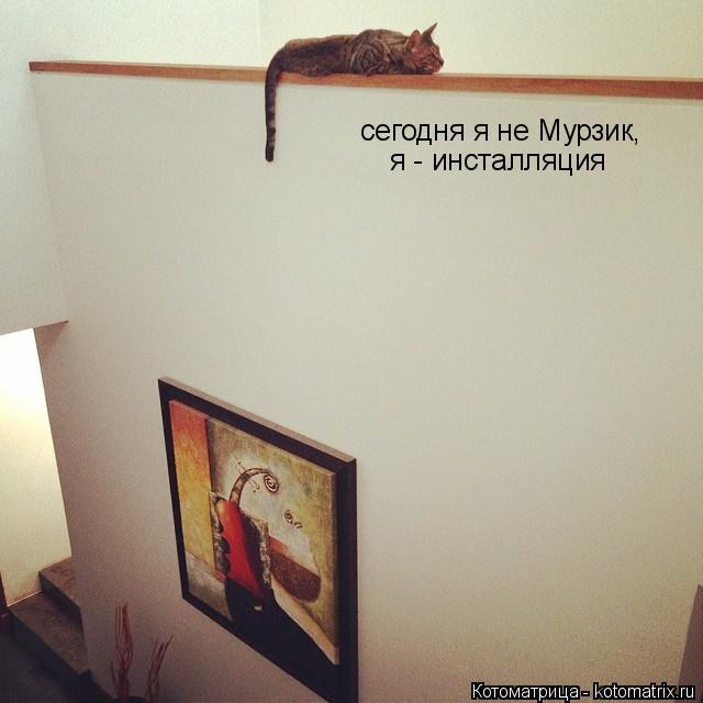 Котоматрица: сегодня я не Мурзик, я - инсталляция