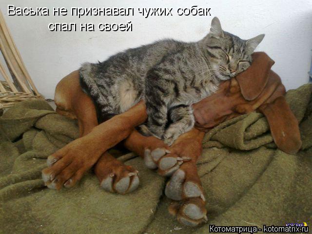 Котоматрица: Васька не признавал чужих собак спал на своей
