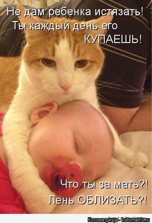 Котоматрица: Не дам ребенка истязать! Ты каждый день его  КУПАЕШЬ! Что ты за мать?! Лень ОБЛИЗАТЬ?!
