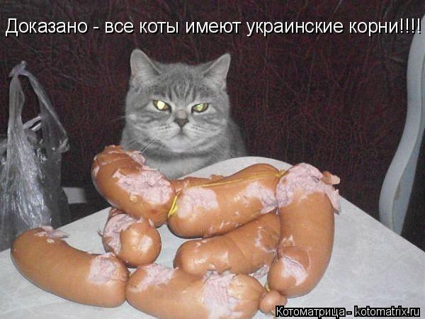 Котоматрица: Доказано - все коты имеют украинские корни!!!!
