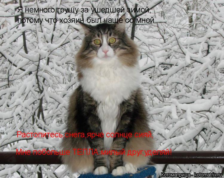 Котоматрица: Я немного грущу за ушедшей зимой,  потому что хозяин был чаще со мной  Растопитесь,снега,ярче солнце сияй, Мне побольше ТЕПЛА.милый друг,удел
