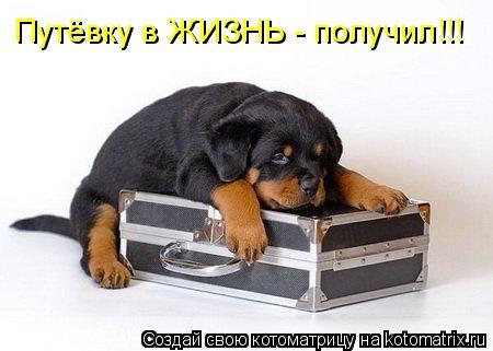 Котоматрица: Путёвку в ЖИЗНЬ - получил!!!