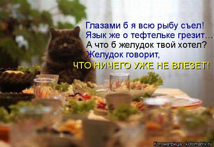 Котоматрица: ЧТО НИЧЕГО УЖЕ НЕ ВЛЕЗЕТ! Желудок говорит,  А что б желудок твой хотел? Язык же о тефтельке грезит… Глазами б я всю рыбу съел!