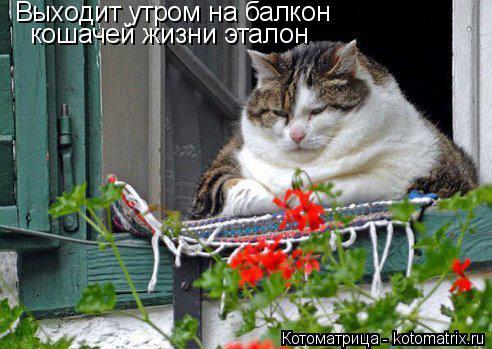 Котоматрица: Выходит утром на балкон кошачей жизни эталон