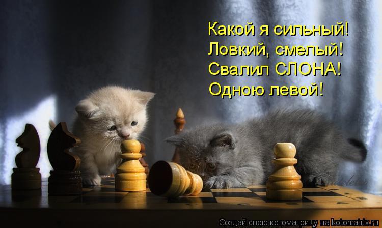Котоматрица: Какой я сильный!  Ловкий, смелый! Свалил СЛОНА! Одною левой!