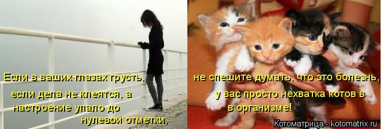 Котоматрица: Если в ваших глазах грусть,                не спешите думать, что это болезнь, если дела не клеятся, а                           у вас просто нехватка котов в на