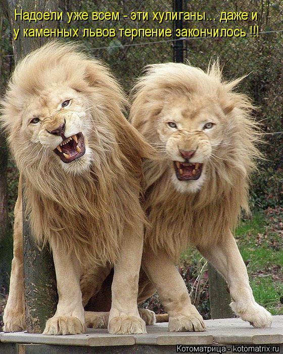 Котоматрица: Надоели уже всем - эти хулиганы... даже и  у каменных львов терпение закончилось !!!