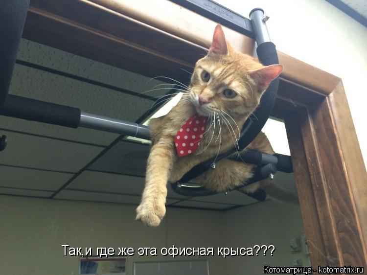 Котоматрица: Так,и где же эта офисная крыса???
