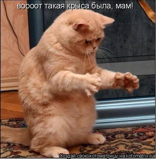 Котоматрица: воооот такая крыса была, мам!