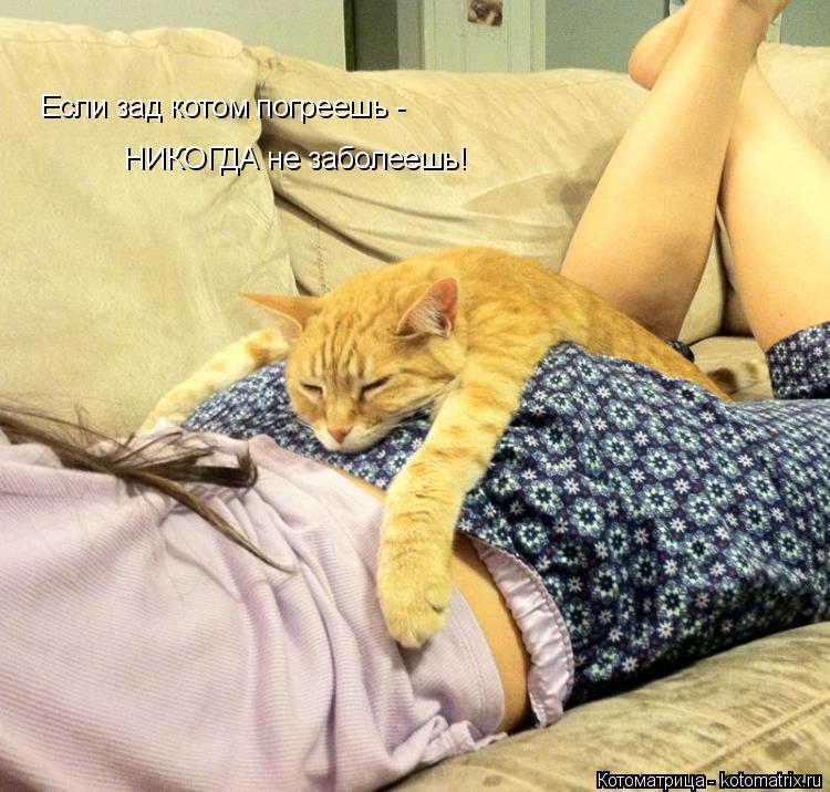 Котоматрица: Если зад котом погреешь -  НИКОГДА не заболеешь!