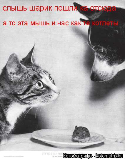 Котоматрица: слышь шарик пошли ка отсюда   а то эта мышь и нас как те котлеты