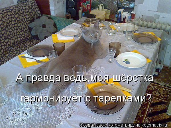 Котоматрица: А правда ведь,моя шёрстка гармонирует с тарелками?