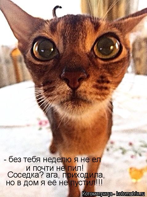 Котоматрица: - без тебя неделю я не ел  и почти не пил! Соседка? ага, приходила, но в дом я её не пустил!!!