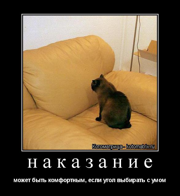 Котоматрица: наказание может быть комфортным, если угол выбирать с умом