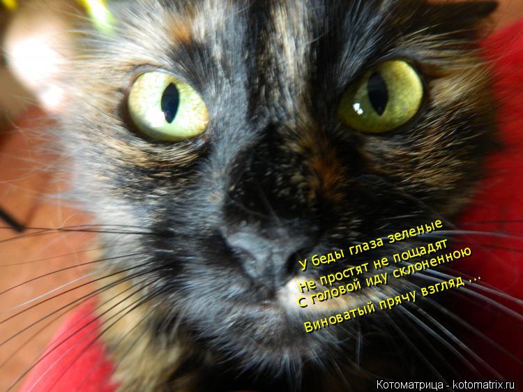 Котоматрица: Не простят не пощадят    С головой иду склоненною   У беды глаза зеленые    Виноватый прячу взгляд ...