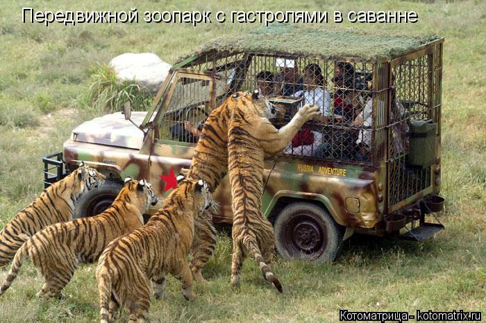 Котоматрица: Передвижной зоопарк с гастролями в саванне