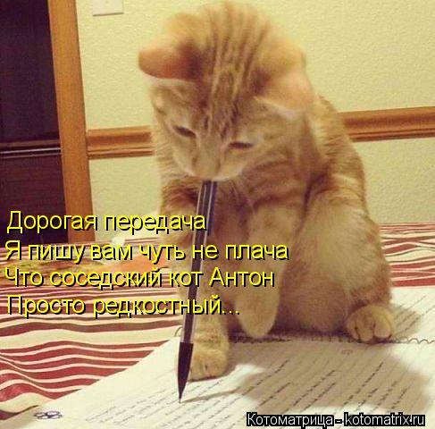Котоматрица: Дорогая передача Я пишу вам чуть не плача Что соседский кот Антон Просто редкостный...