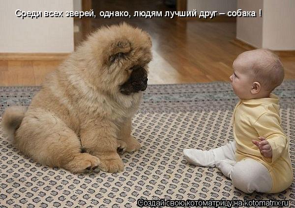 Котоматрица: Среди всех зверей, однако, людям лучший друг – собака !