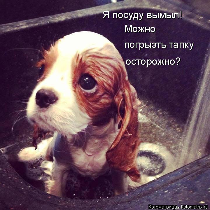 Котоматрица: Я посуду вымыл! Можно погрызть тапку осторожно?