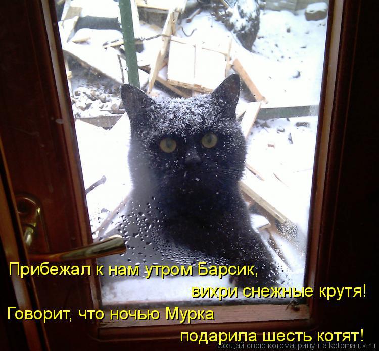 Котоматрица: подарила шесть котят! Прибежал к нам утром Барсик, вихри снежные крутя! Говорит, что ночью Мурка