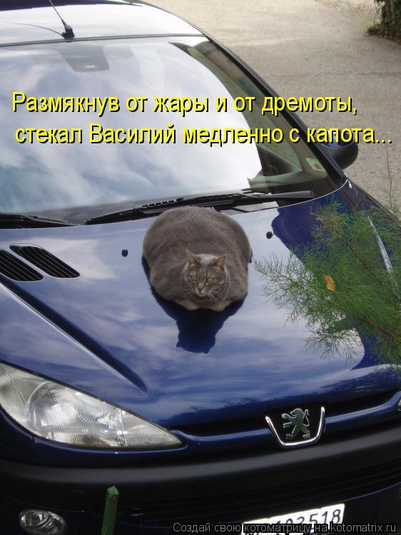 Котоматрица: Размякнув от жары и от дремоты, стекал Василий медленно с капота...