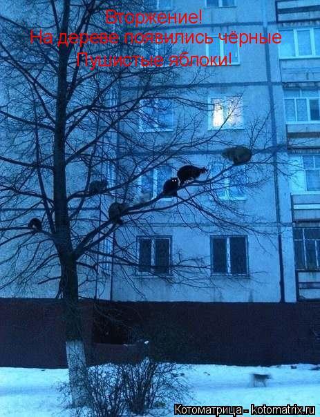 Котоматрица: Вторжение! На дереве появились чёрные Пушистые яблоки!