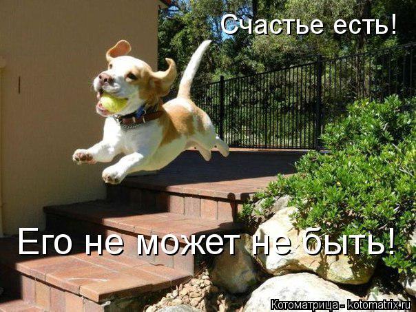 Котоматрица: Счастье есть!  Его не может не быть!