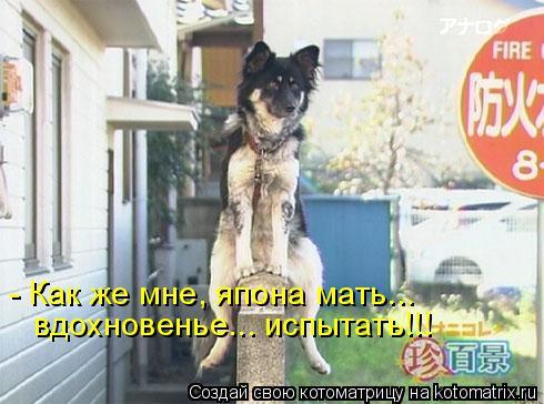 Котоматрица: - Как же мне, япона мать... вдохновенье... испытать!!!