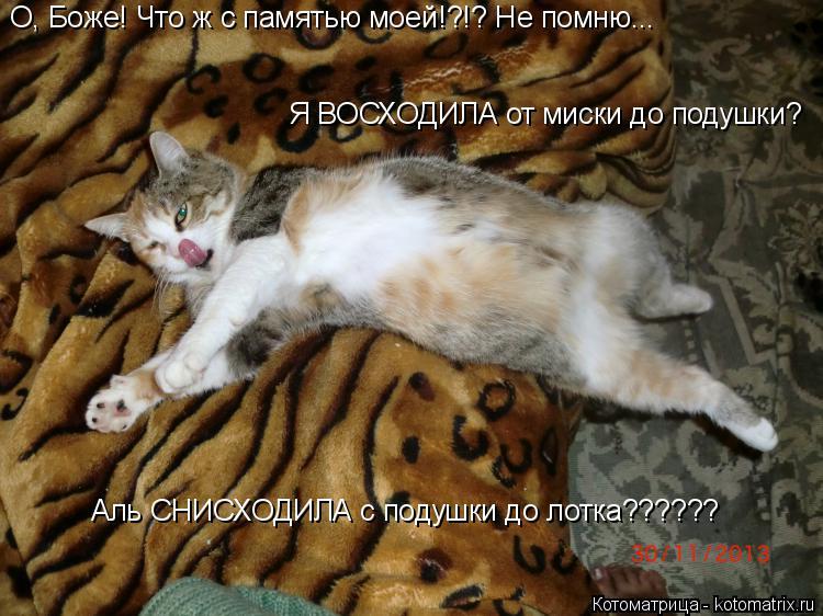 Котоматрица: О, Боже! Что ж с памятью моей!?!? Не помню... Я ВОСХОДИЛА от миски до подушки? Аль СНИСХОДИЛА с подушки до лотка??????