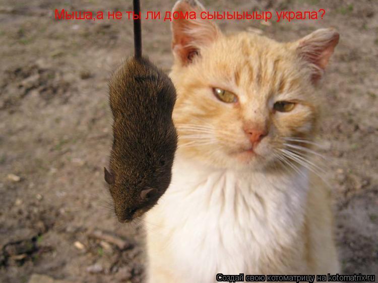 Котоматрица: Мыша,а не ты ли дома сыыыыыыр украла? Мыша,а не ты ли дома сыыыыыыр украла?