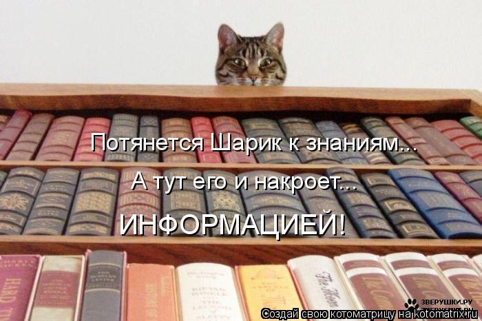 Котоматрица: Потянется Шарик к знаниям... А тут его и накроет... ИНФОРМАЦИЕЙ!