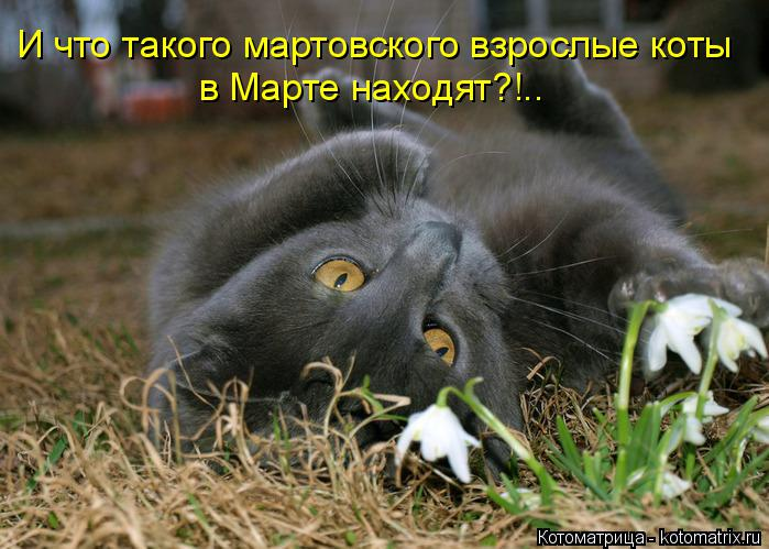 Котоматрица: И что такого мартовского взрослые коты  в Марте находят?!..