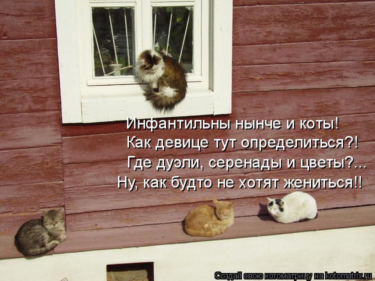 Котоматрица: Инфантильны нынче и коты! Как девице тут определиться?! Где дуэли, серенады и цветы?... Ну, как будто не хотят жениться!!