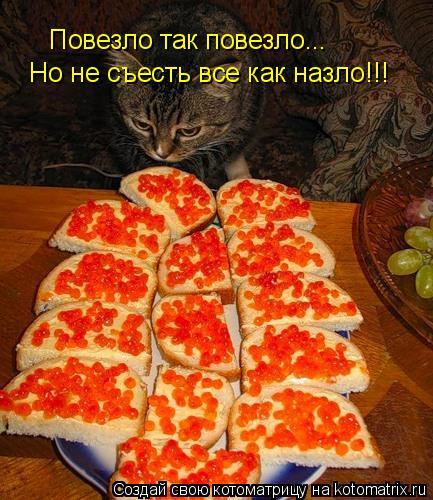 Котоматрица: Повезло так повезло... Но не съесть все как назло!!!