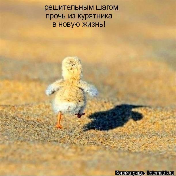Котоматрица: решительным шагом прочь из курятника в новую жизнь!