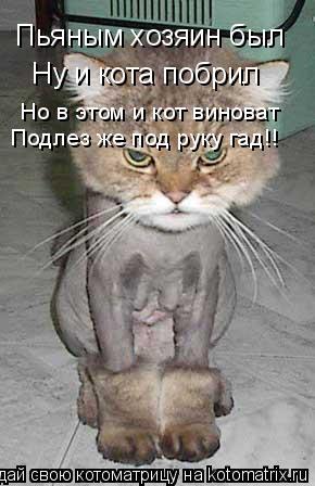 Котоматрица: Пьяным хозяин был Ну и кота побрил Но в этом и кот виноват Подлез же под руку гад!!