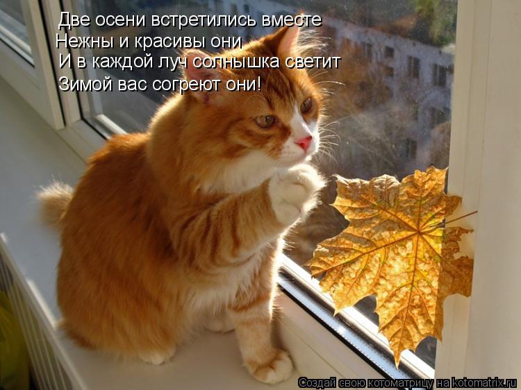 Котоматрица: Две осени встретились вместе Нежны и красивы они И в каждой луч солнышка светит Зимой вас согреют они!