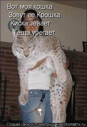 Котоматрица: Вот моя кошка Вот моя кошка Зовут ее Крошка Киска зевает Тёща убегает.