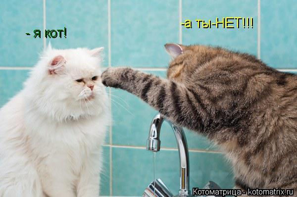 Котоматрица: - я кот! -а ты-НЕТ!!!