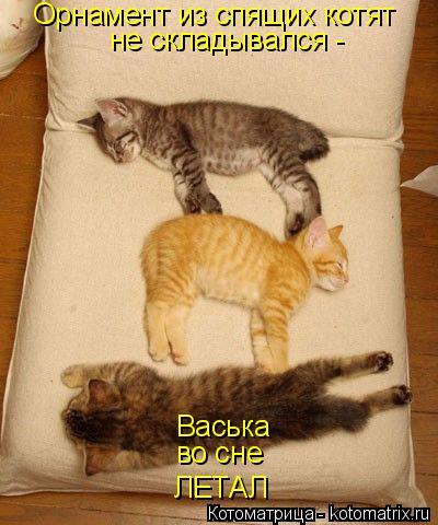 Котоматрица: Орнамент из спящих котят не складывался - Васька во сне ЛЕТАЛ