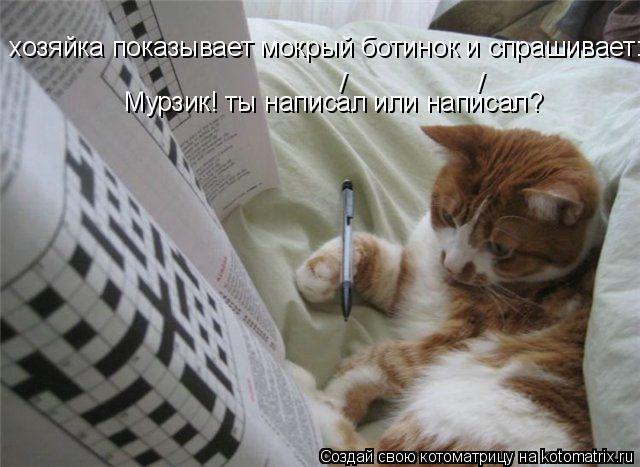 Котоматрица: Мурзик! ты написал или написал? хозяйка показывает мокрый ботинок и спрашивает: / /