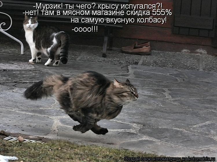 Котоматрица: -Мурзик! ты чего? крысу испугался?! -нет! там в мясном магазине скидка 555%  -нет! там в мясном магазине скидка 555%  на самую вкусную колбасу!  -оооо